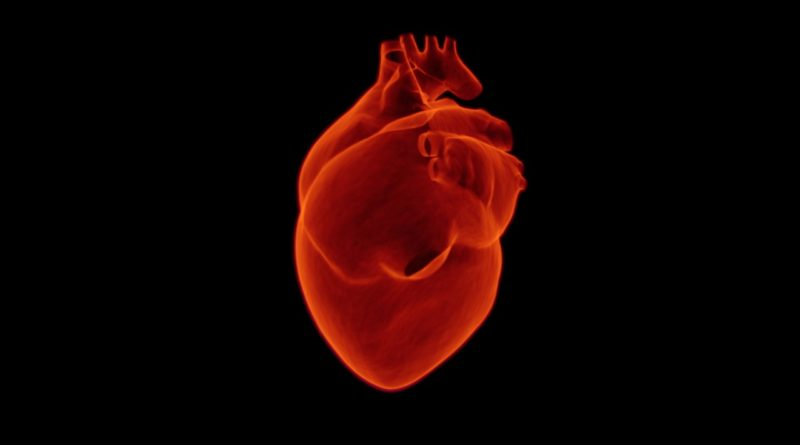 serce-organ